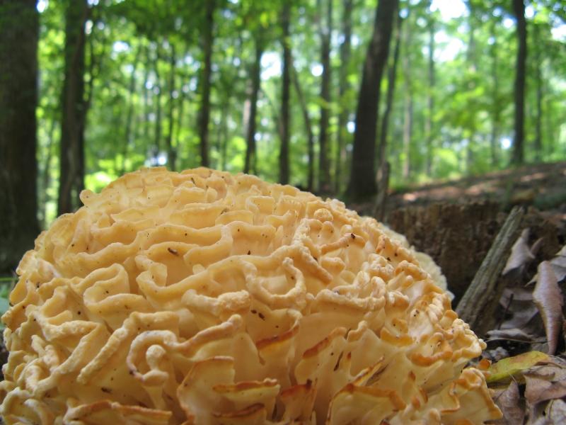 MushroomBrain