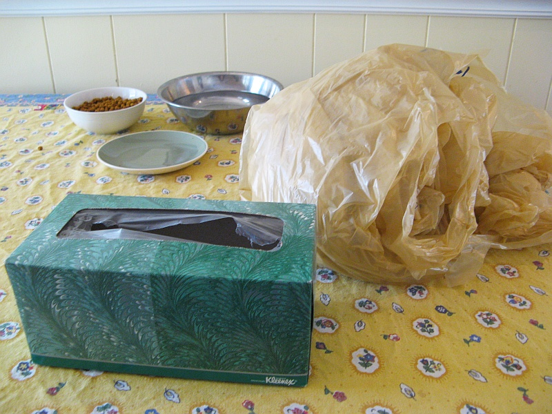 Tissue box and grocery sacks