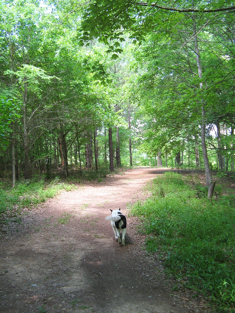 Lucky walks down the trail
