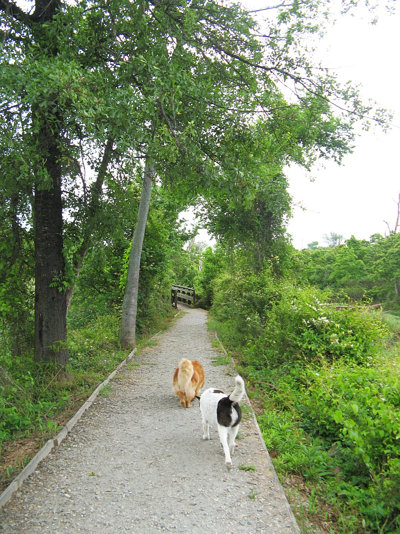 Lucky and Ginger on the trail