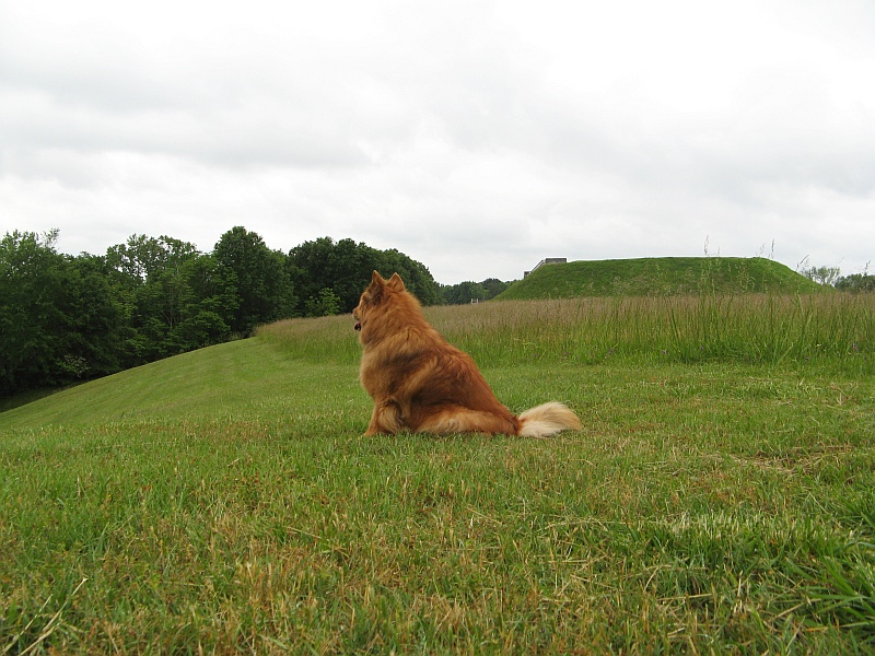 Ginger with the Indian Mound