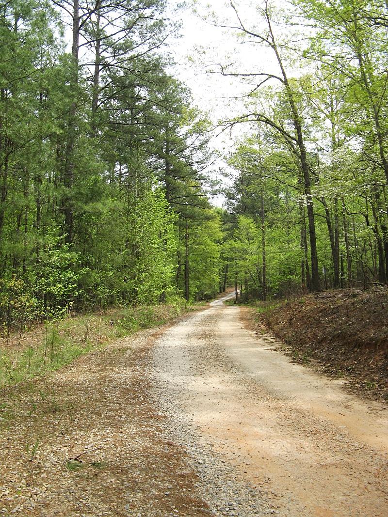 Woodsy road