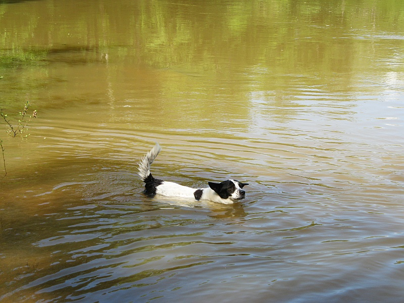 Lucky practices for his olympic swim