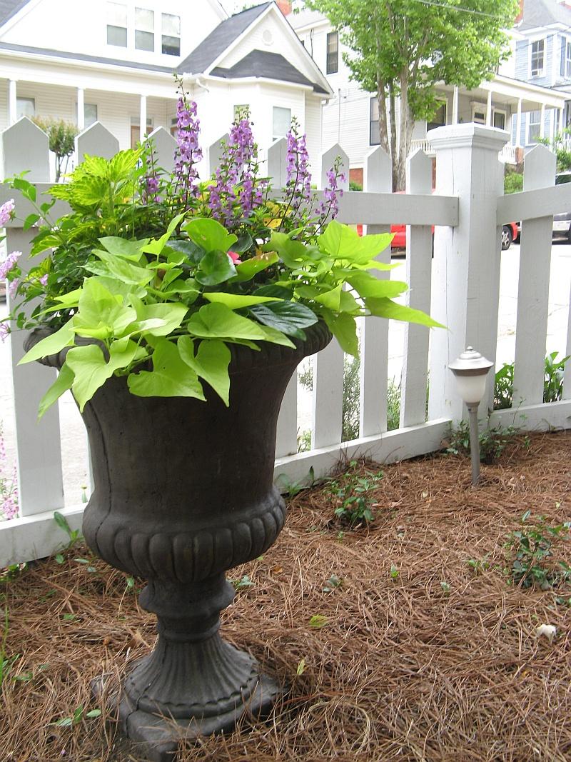 Spring planted urn