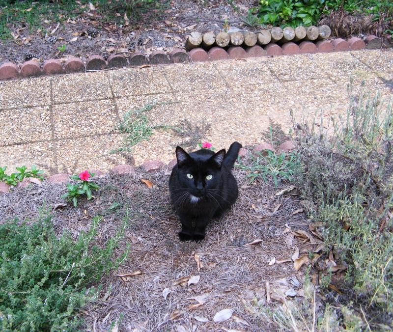 Cute neighbor cat