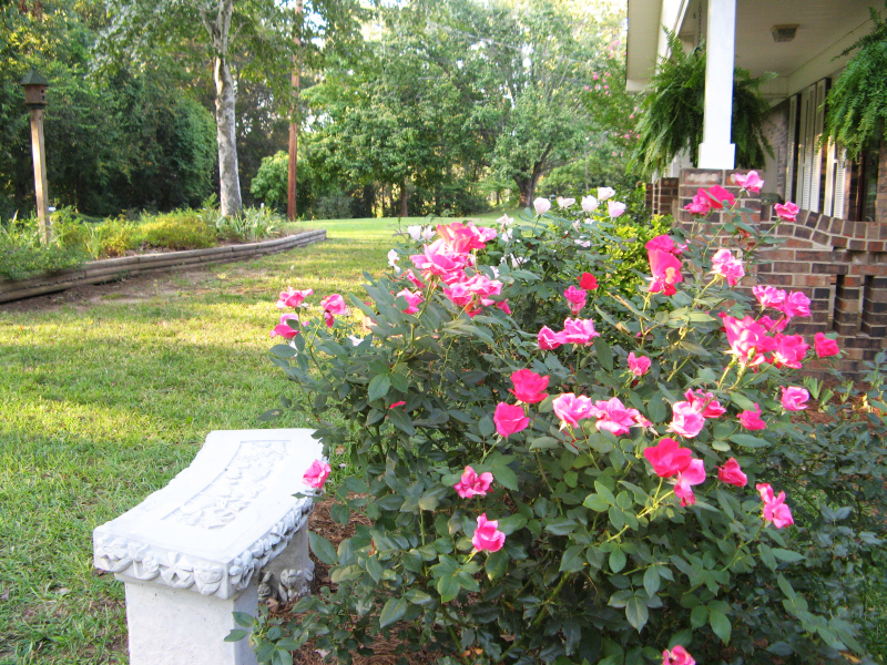 Front yard flowers