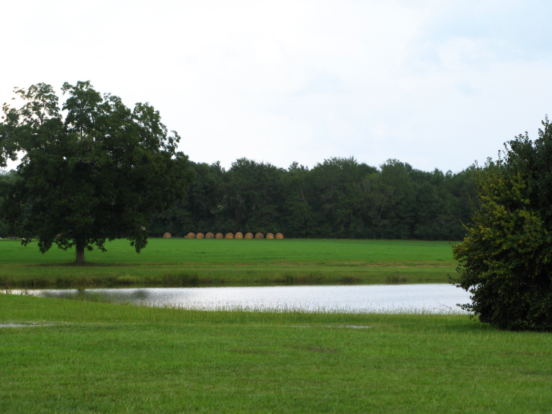 Pond hay bales