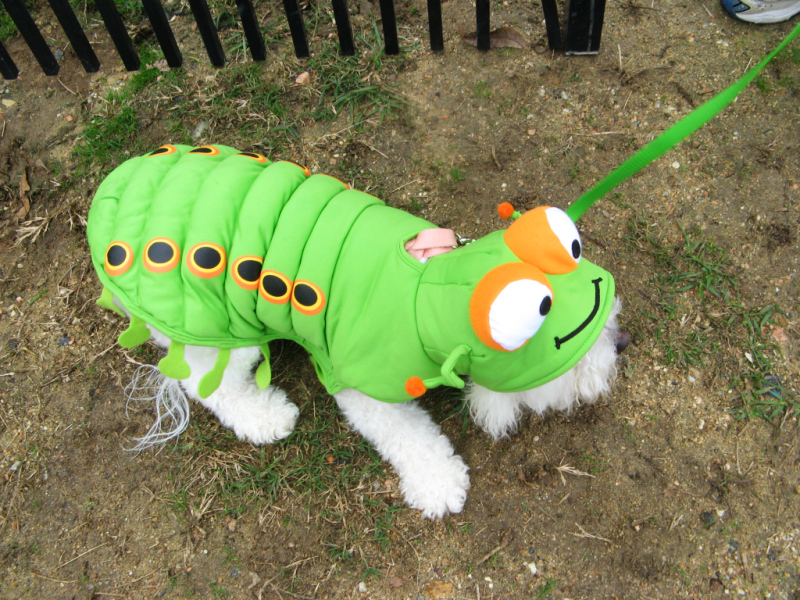 Dog Park 5th anniversary caterpiller