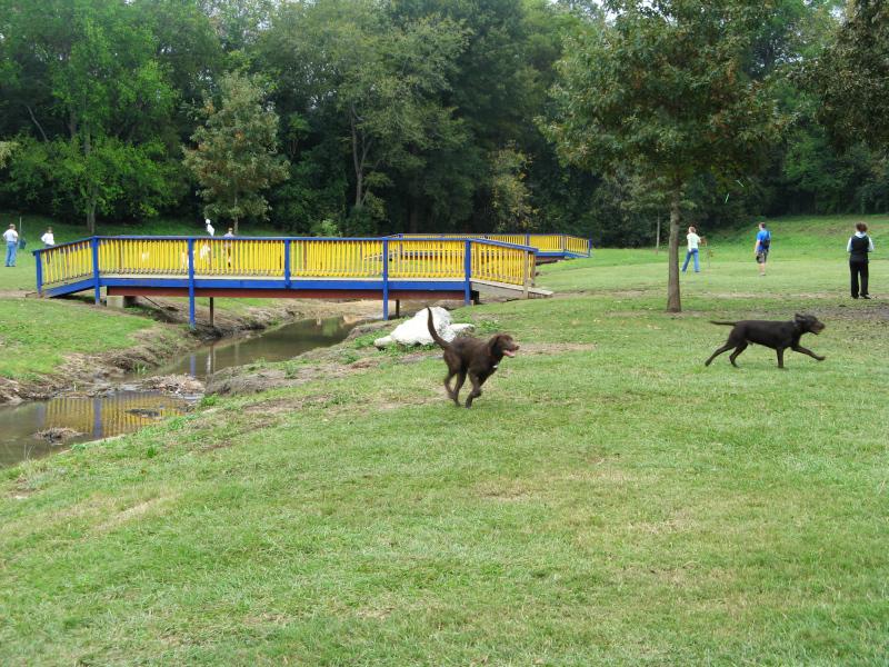 Dog Park 5th anniversary running