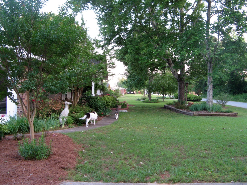 Lucky and Slash in the front yard