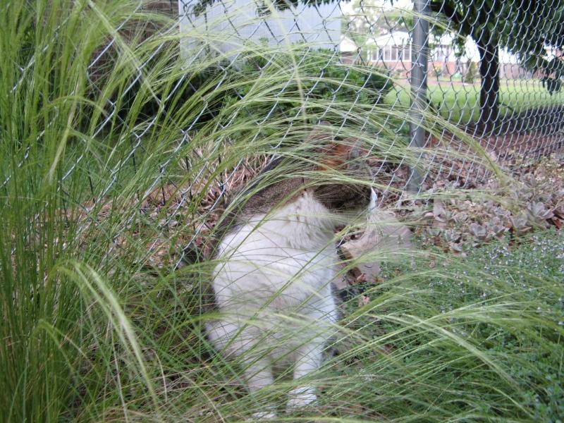 Slash hides in the garden