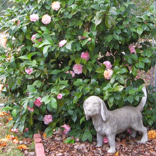 Pink Camellias beagle dog statue