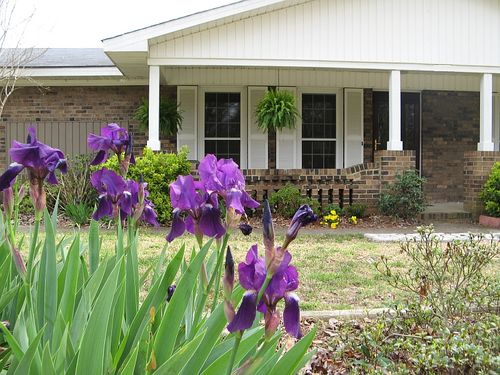 Ranch house front garden 2010