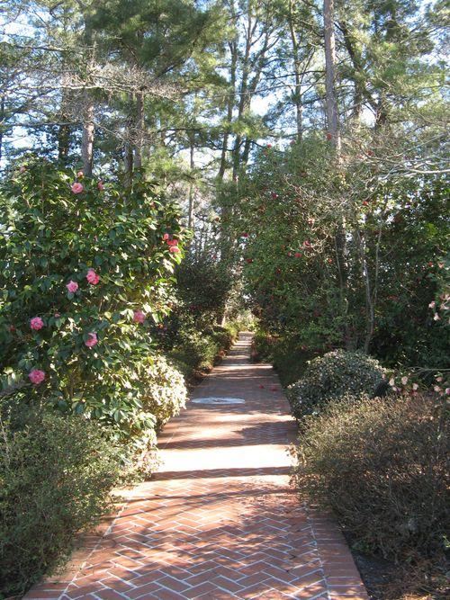 Massee Lane Camellia Gardens Formal Garden walk