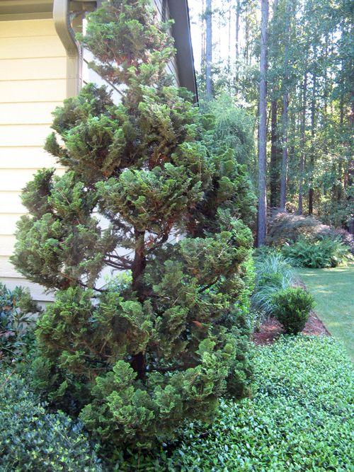 Henry County Georgia Garden Tour 2012 corner