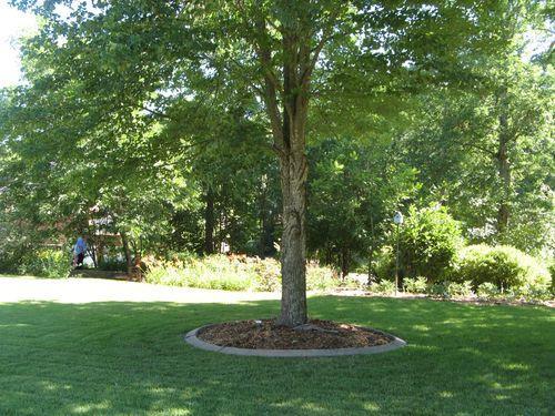 Dow Lake Henry County Georgia Garden Tour 2012 front lawn tree