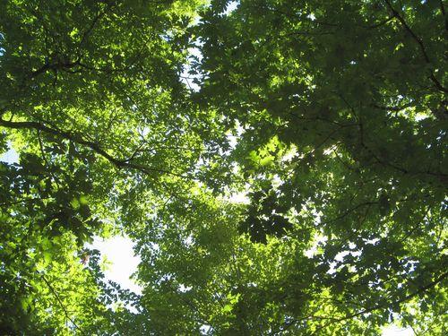 Garden Tour Henry County Georgia 2012 trees