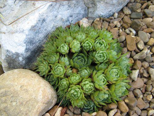 Garden Tour Henry County Georgia 2012 succulent