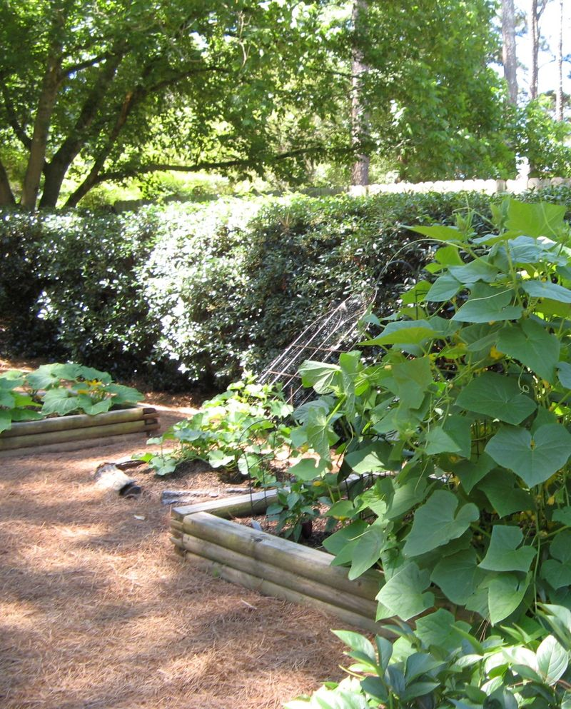 2012 Henry County Georgia Garden Tour raised beds