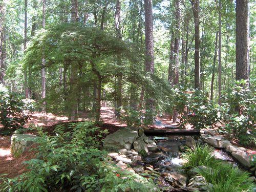 A Henry County Georgia Garden Tour 2012 japanese maple