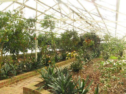 Massee Lane Camellia Gardens formal greenhouse