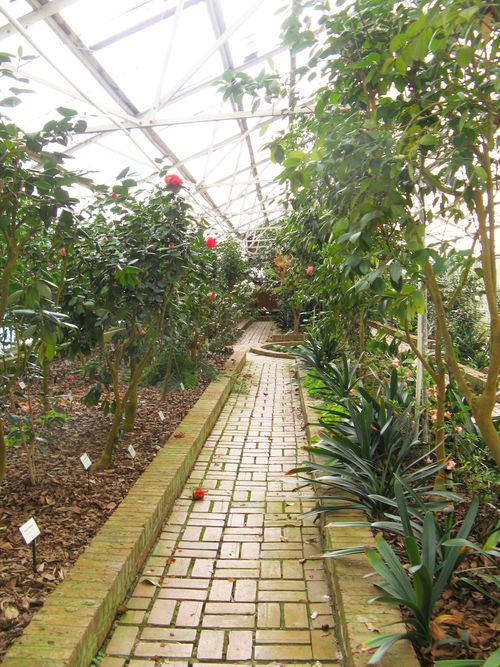 Massee Lane Camellia Gardens Landscaped Greenhouse