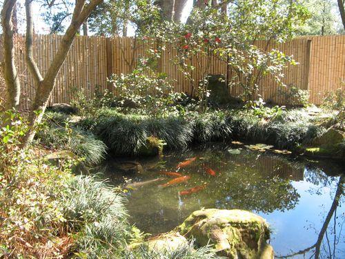 Massee Lane Camellia Gardens Japanese Garden koi pond