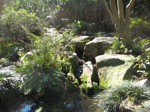 Massee Lane Camellia Gardens Japanese Garden waterfall