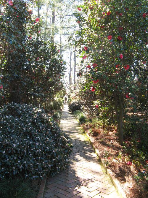 Massee Lane Camellia Gardens Formal Garden walkway daphne
