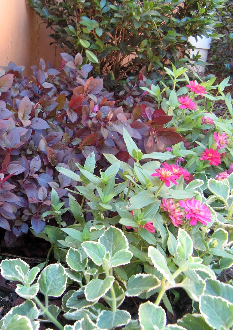 Garden Tour Henry County Georgia 2012 plants