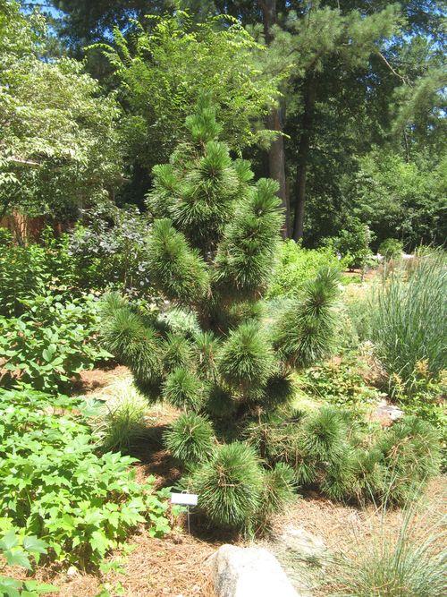 2012 Henry County Georgia Garden Tour thunderhead