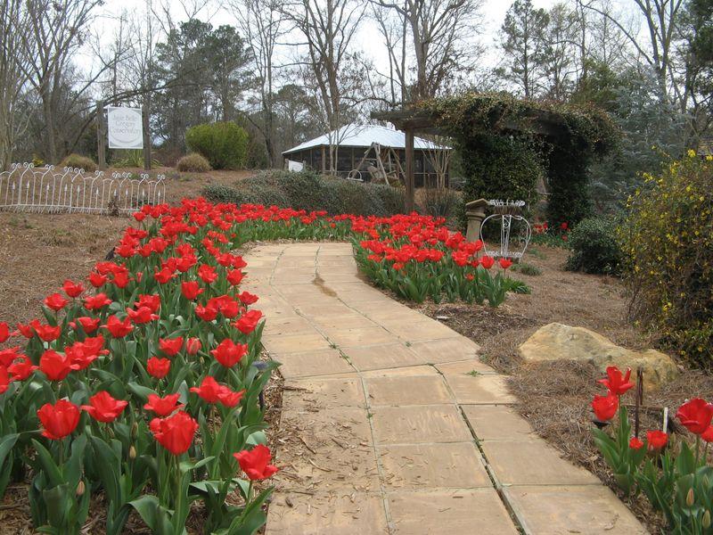 Indian Springs Georgia Whimsical Garden red tulip walkway