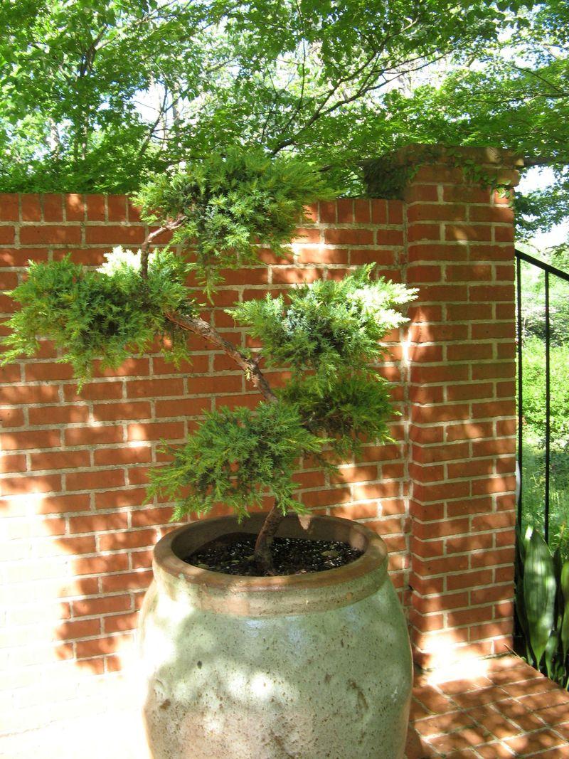 Athens Georgia Garden Tour 2013 potted tree