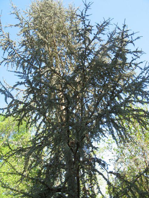 Athens Georgia Garden Tour 2013 tree texture