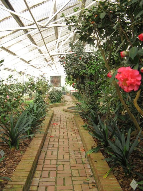 Massee Lane Camellia Gardens Landscaped Greenhouse brick path