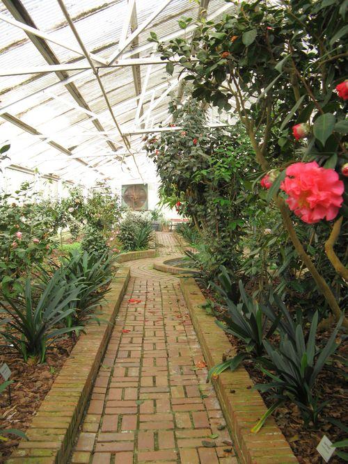 Massee Lane Camellia Gardens Landscaped Greenhouse brick path