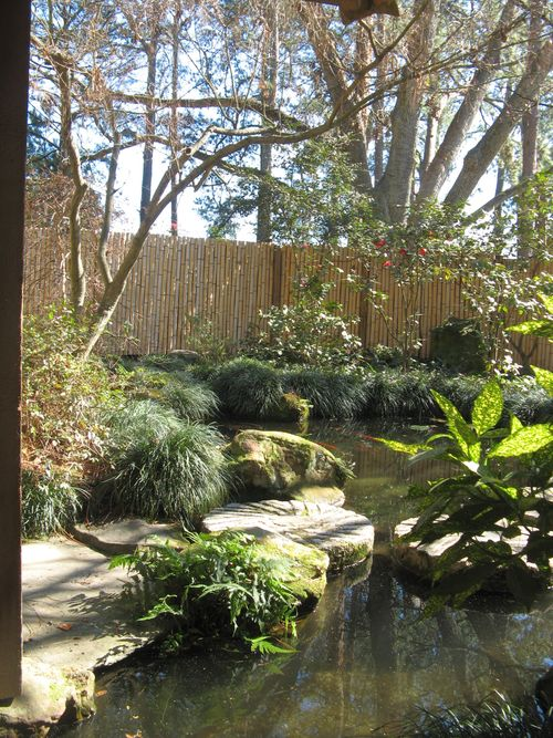 Massee Lane Camellia Gardens Japanese Garden view from hut