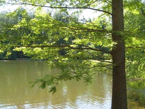 Garden Tour Henry County Georgia 2012 pond tree
