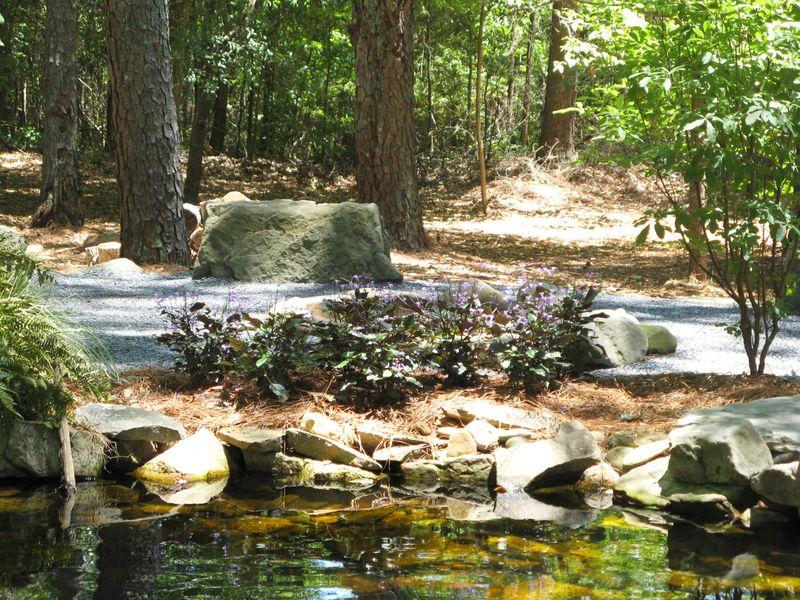 A Henry County Georgia Garden Tour 2012 Plectranthus Mona Lavender