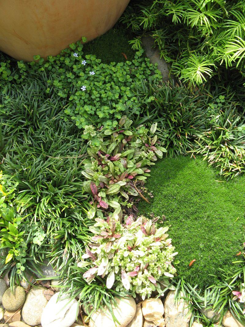 Athens Garden Tour 2012 groundcover textures
