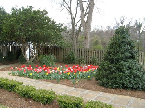 Indian Springs Georgia Rose Garden tulips