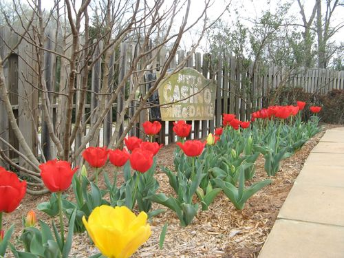 Indian Springs Georgia Whimsical Garden red tulips
