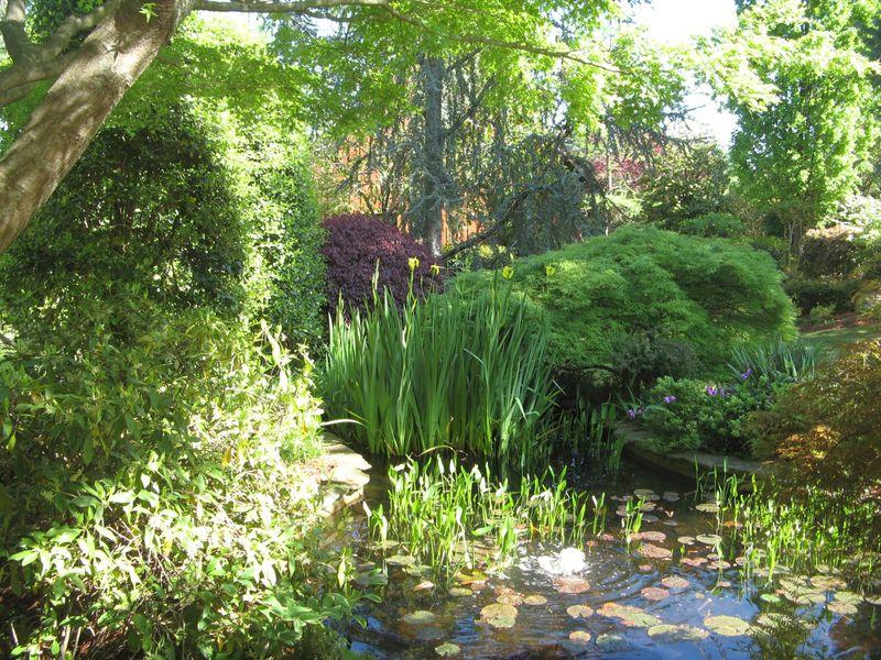 Athens Georgia Garden Tour 2013 pond closeup