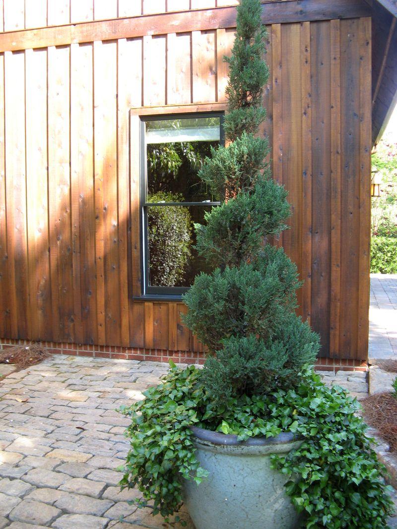 Athens Georgia Garden Tour 2013 tree in pot