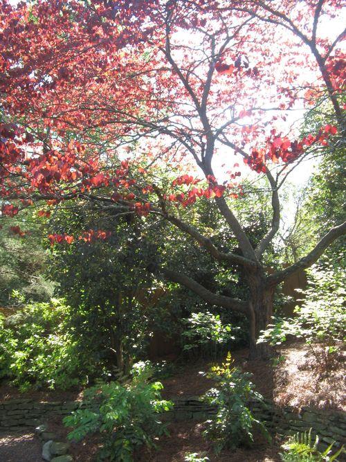 Athens Georgia Garden Tour 2013 parterre garden corner tree