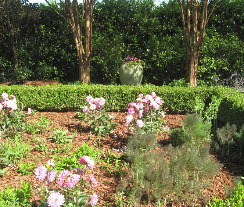 Athens Georgia Garden Tour 2013 parterre garden pink peonies