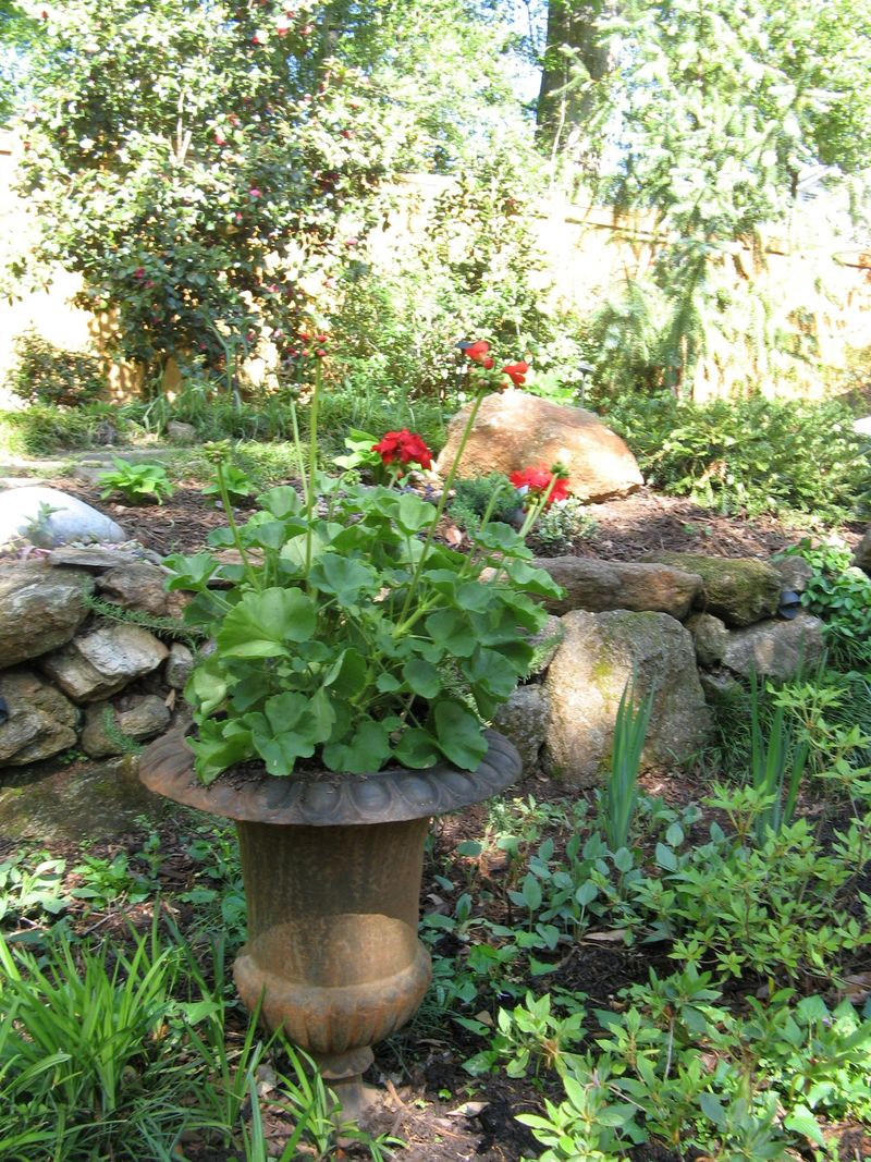 Athens Georgia Garden Tour 2013 red geranium iron urn planter