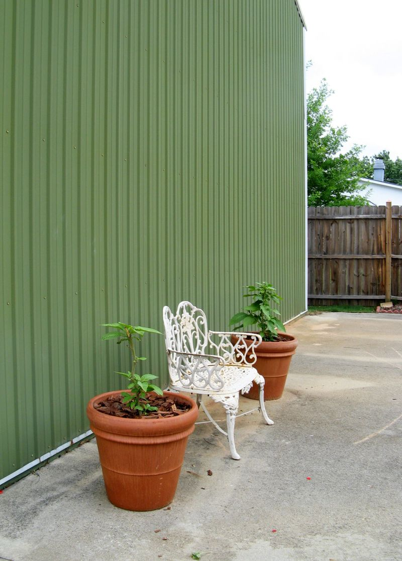 My Garden May 2013 back garden white iron bench yellow angel trumpet