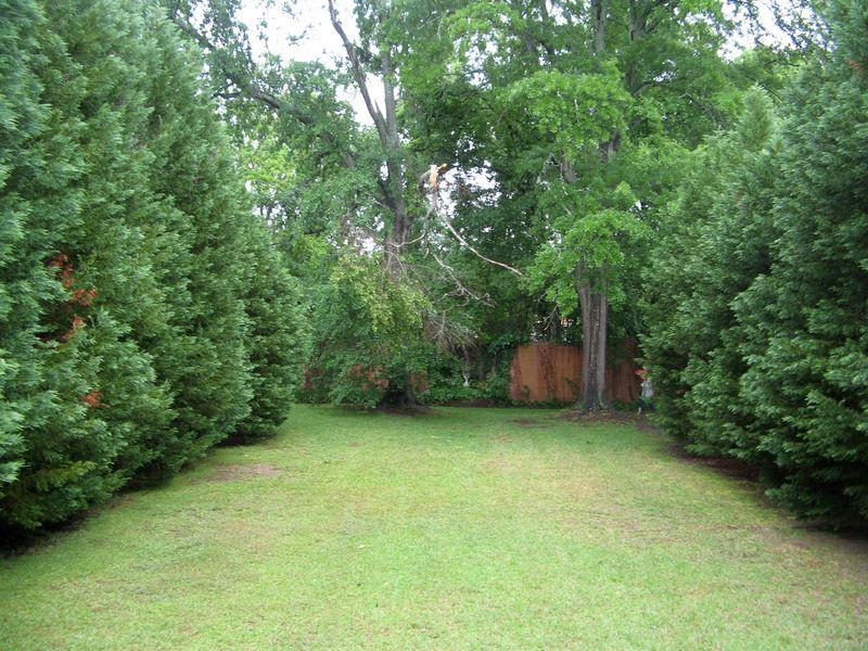 Macon Georgia Garden Tour 2013 tree allee
