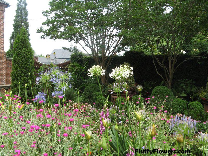 Macon Georgia Garden Tour June 2013 138